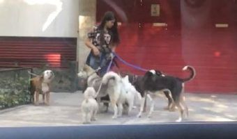 VIDEO: Paseadora golpea a perritos en Polanco